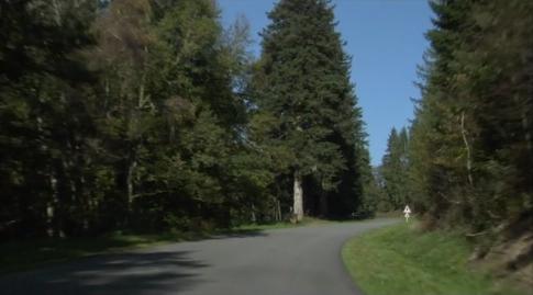 Route en forêt 2.jpg