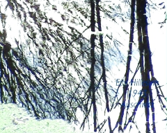 sandrine treuillard,Édith stein,etty hillesum,charlotte delbo,foi,christianisme,art & culture,artiste,la france,politique