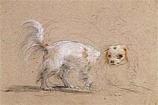 Petit chien.jpg